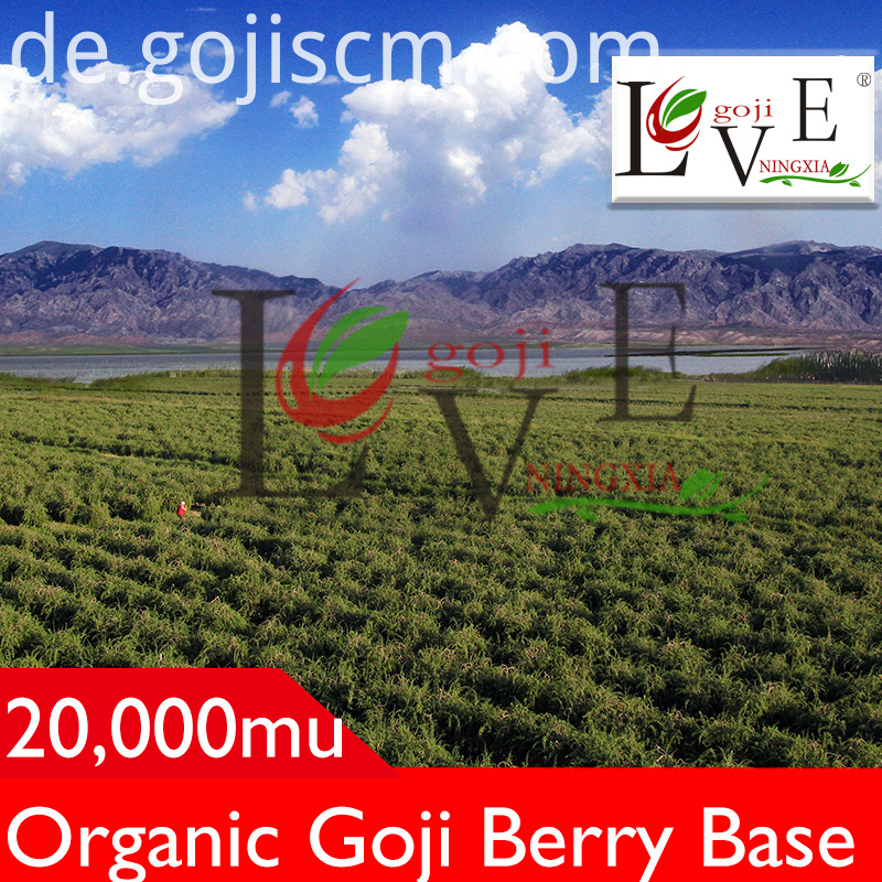 Pure Plump Goji Berries base