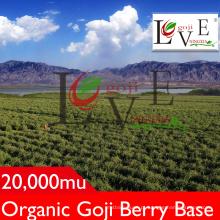 Baga de Goji padrão alto / não GMO Goji Berry