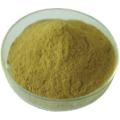 Extrait de plante de grain de café vert dans l'acide chlorogénique
