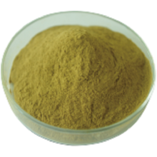 Natural Extract Chlorogenic Acids From Green Coffee Bean