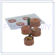 ПНТ-0735 пластинированное кровеносные сосуды образцы для продажи