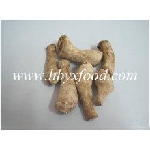 Shiitake cogumelo caule, Shiitake perna