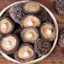 Champignons Shiitake séchés de haute qualité