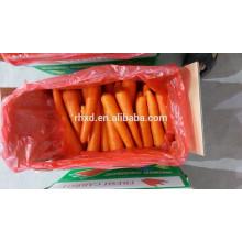 Цена моркови в Китае, экспорт моркови