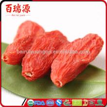 Goji berry como consumir goji lycium pianta delle bacche di goji