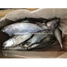 IQF Bonito peixe para o mercado