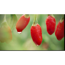 Hot selling high quality Ningxia Organic Goji Berries Dried Chinese Red Wolfberry