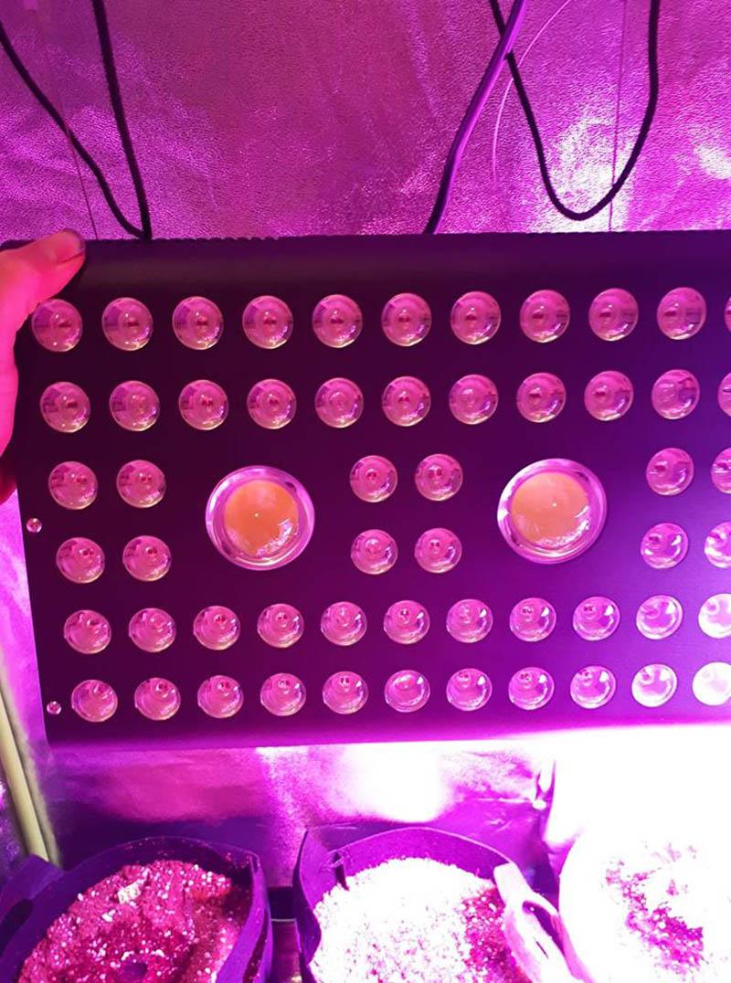 aglex cob 1200w grow light