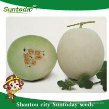 Suntoday кожура белая с желтым зеленый цвет плоти японский овощ гибридные семена арбуза Ф1 высокий раз семена на продажу(18015)