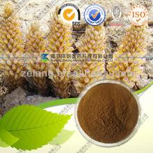 Mejora sexual Cistanche Deserticola Extract