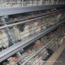 Jinfeng Broiler Farm Cage para la carne