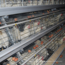 Jinfeng Broiler Farm Cage for Meat