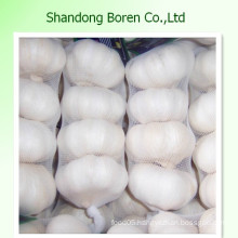 Food Fresh Vegetables Chinese Standard Fresh Garlic Garlic