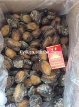 Best Price IQF Frozen Abalone with shell