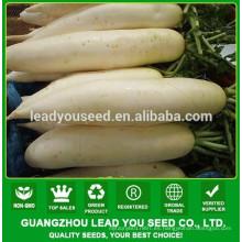 Productor de guangzhou de semillas de rábano híbrido de NR131 Caitu