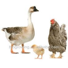 Probióticos veterinarios