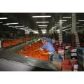 2016 nuevo cultivo zanahoria fresca de diferente tamaño