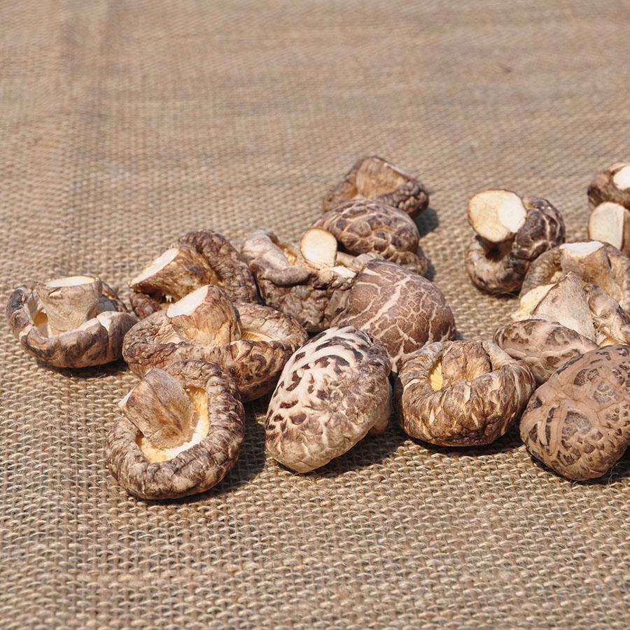 Brown flower mushroom