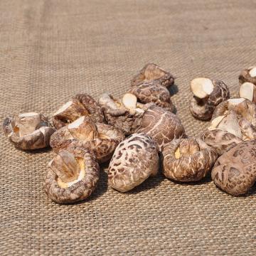 Hochwertige getrocknete Pilze Direktverkauf auf dem Bauernhof