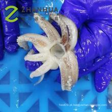 Tubo de lula congelado com tentáculo de lula T + T