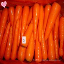 2016 Zanahorias frescas con delicioso sabor Precio