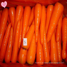 2016 Cenouras frescas com sabor delicioso Preço