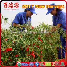 importation goji berry en vrac goji nourriture biologique fruits surgelés