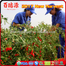 импорт ягоды годжи оптом ягоды годжи органические продукты питания замороженные фрукты