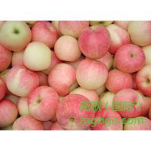Exporta la buena calidad Gala china fresca Apple
