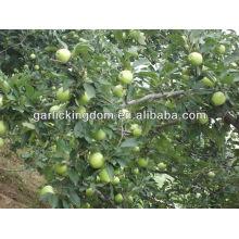 Grüne gala / grüner Apfel roter Apfel aus China