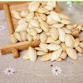 Semillas de calabaza híbridas comunes en concha