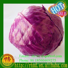 Cabbage Wholesale Fresh Red Cabbage