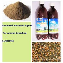 Aditivo para piensos orgánicos de algas marinas