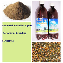 Seaweed Microbial Feed Additive for organic feeding