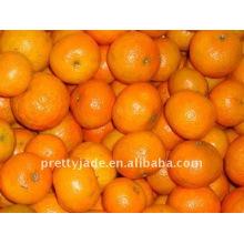 Baby Mandarin Lieferant