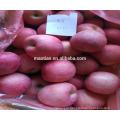 china fresh apple