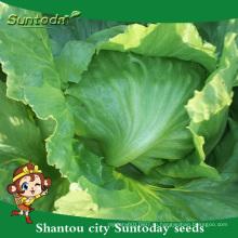 Высокая Suntoday раз семена продажа овощных органические голове Ф1 салат айсберг семена сеялка сеялка всхожесть Ф1(32002-2)