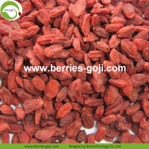 Venta al por mayor Healthy Red Eu Standard Goji Berry