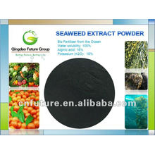 Frisches braunes Meerespflanze-Auszug-Pulver von den braunen Meerespflanzen Sargasso