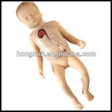 Entrenamiento avanzado de la intubación neonatal periférica y de la vena central de ISO, modelo del cuidado del bebé