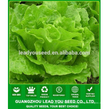 NLT07 Gaolian graines de laitue de qualité pour la plantation, graines pour agricuNLTural