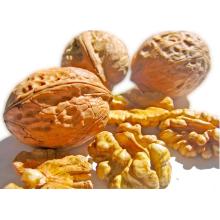 fresh walnut kernels for sale