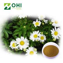 Poudre de thé instantané d'extrait de fleur de chrysanthème
