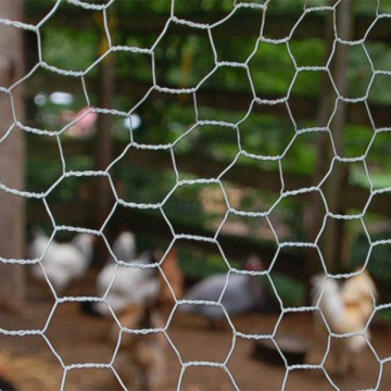 Sechseckgeflecht Chicken Wire Fencing