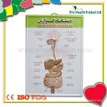 Анатомический медицинский плакат с трехмерной стеной для больницы