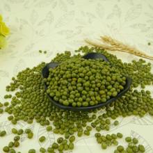 2012 nouvelle récolte petit haricot mungo vert pour les choux, 2.8-4.0mm, origine Hebei