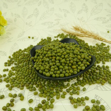 Green mung bean price