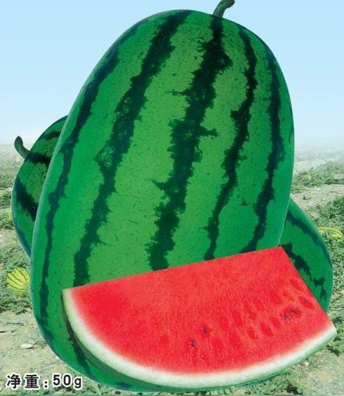 Best-sell Watermelon Seeds