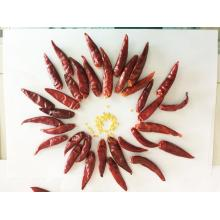 Primera Calidad Dry Chilli Pepper for Wholesale