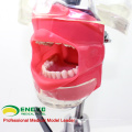DENTAL02-2(12561) Table Phantom Head Tooth Prepare Practice Models